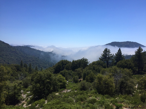 This was the scene last week as Tripp and I drove from the desert floor up to 6000 feet to Idyllwild. We rose through the clouds and then broke into the sun in the mountains just in time to play some jazz!