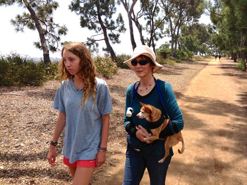 Our east Encinitas walk with Kylie and Stef carrying the little Rocky Boy. He did most of the walk on his own 2 legs but started to wear down.