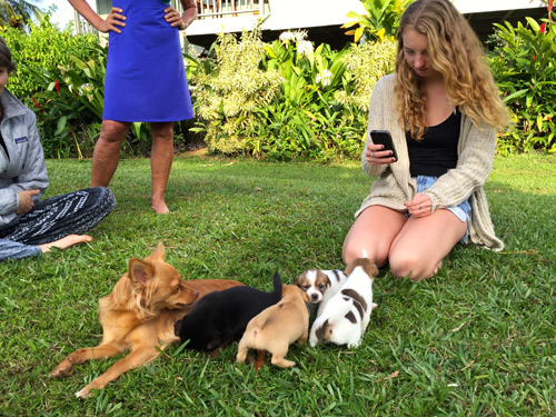 Dogs have it good in Kauai. Here's Kylie photographing Bella and her new pups.