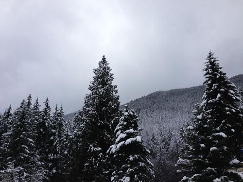 Snowy spring break in Mt. Rainier!
